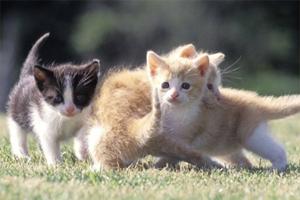 猫怎么社会化训练
