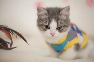 飞机托运猫咪需要什么